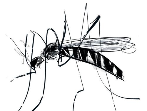 Achtung: Umgang gegen die Tigermücke